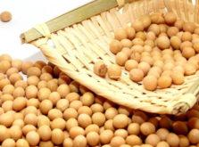 大豆イソブラボン